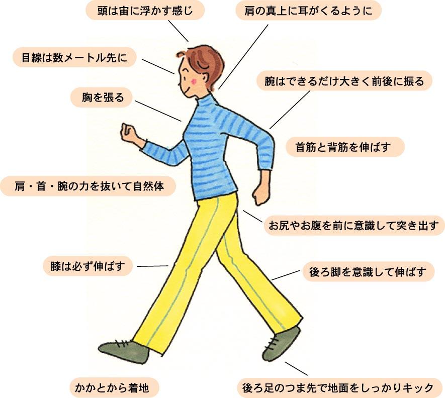 頭は宙に浮かす感じ、肩の真上に耳がくるように、目線は数メートル先に、腕はできるだけ大きく前後に振る、胸を張る、首筋と背筋を伸ばす、肩・首・腕の力を抜いて自然体、お尻やお腹を前に意識して突き出す、膝は必ず伸ばす、後ろ脚を意識して伸ばす、かかとから着地、後ろ足のつま先で地面をしっかりキック